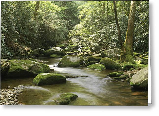 Moss Greeting Cards - Roaring Fork River Flowing Greeting Card by Panoramic Images