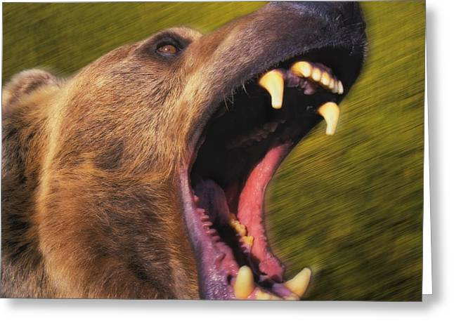 Growling Photographs Greeting Cards - Roaring Grizzly Bears Face Rocky Greeting Card by Thomas Kitchin & Victoria Hurst