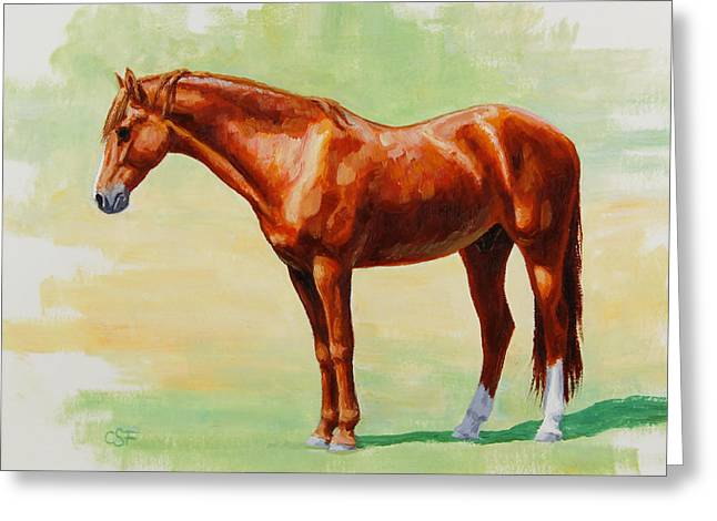 Chestnut Horse Greeting Cards - Roasting Chestnut - Morgan Horse Greeting Card by Crista Forest
