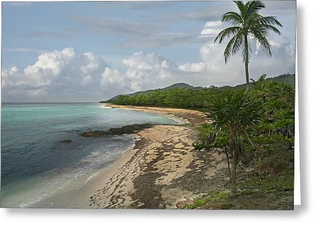 Tim Fitzharris Greeting Cards - Roatan Island in Honduras Greeting Card by Tim Fitzharris