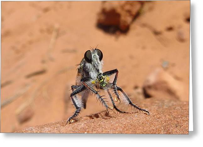 Casey Greeting Cards - Robber Fly Greeting Card by Casey Hodnett