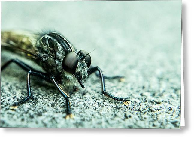Preditor Photographs Greeting Cards - Robber Fly Eyeball to Eyeball Greeting Card by Douglas Barnett