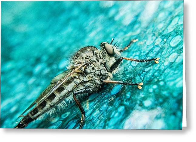 Preditor Photographs Greeting Cards - Robber Fly on Blue Ceraminc Plate 1 Greeting Card by Douglas Barnett