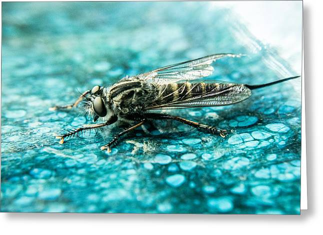 Preditor Photographs Greeting Cards - Robber Fly pm Blue Ceramic Plate Greeting Card by Douglas Barnett