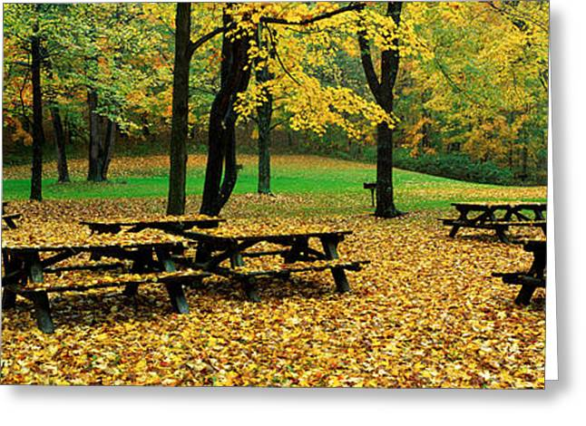 Fallen Leaf Greeting Cards - Robert Treman State Park, New York Greeting Card by Panoramic Images