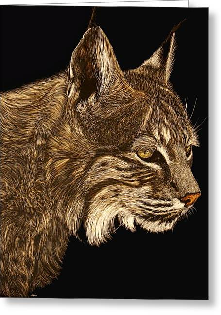 Bobcat Drawings Drawings Greeting Cards - Roberta Greeting Card by Heather Ward