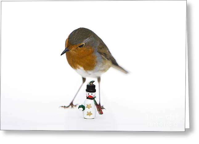 Robin Greeting Cards - Robin and Snowman Greeting Card by Tim Gainey