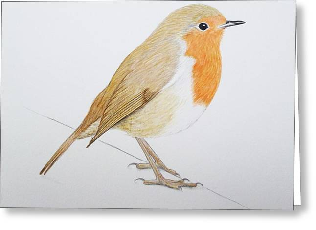 Christmas Card Drawings Greeting Cards - Robin Greeting Card by Ele Grafton
