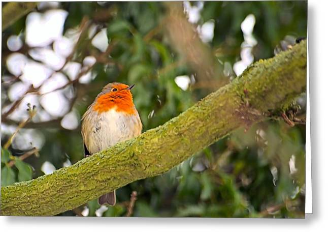 Dave Woodbridge Greeting Cards - Robin On Branch Greeting Card by Dave Woodbridge