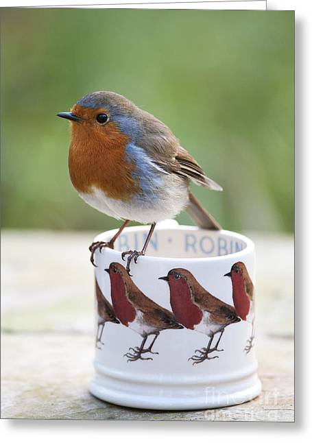 Emma Greeting Cards - Robin Redbreast Greeting Card by Tim Gainey