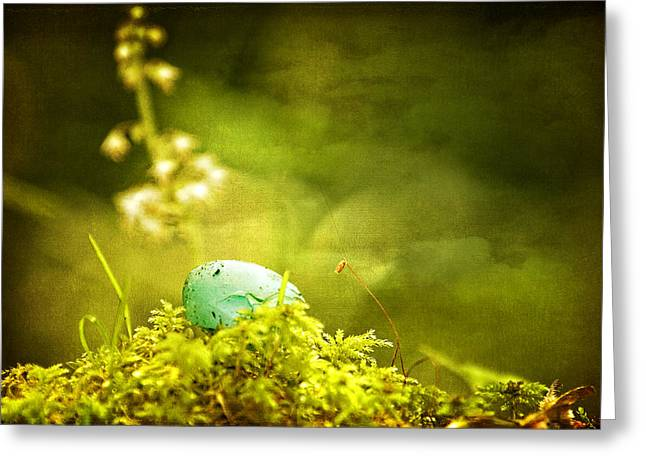 Forest Floor Mixed Media Greeting Cards - Robins Egg on Moss Greeting Card by Peggy Collins