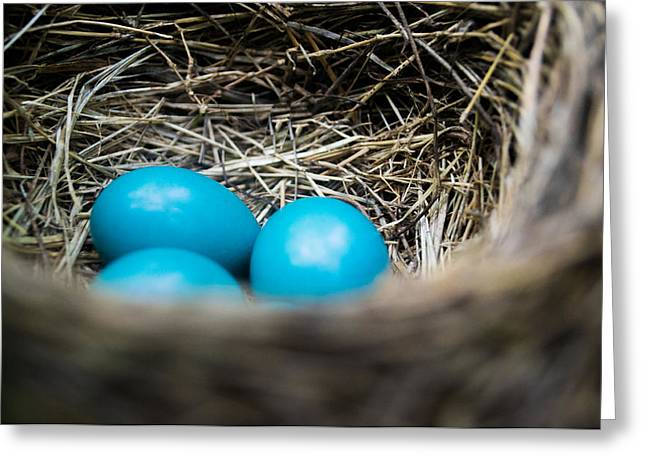 Blue Bird Greeting Cards - Robins Eggs Greeting Card by Shelby  Young