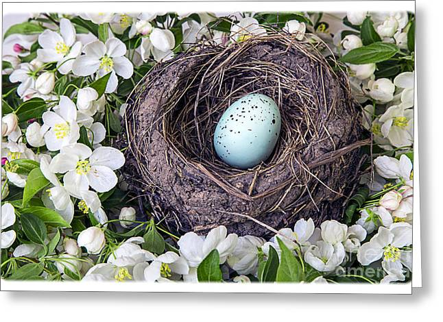 Natural White Photographs Greeting Cards - Robins Nest Greeting Card by Edward Fielding