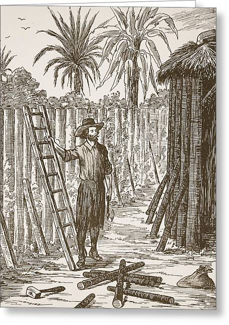 Ashore Greeting Cards - Robinson Crusoe building his bower Greeting Card by English School