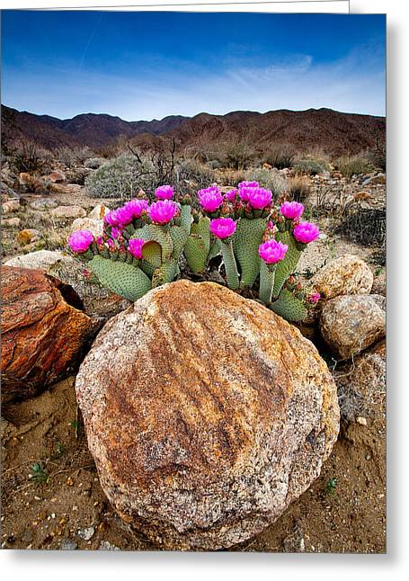 Desert Greeting Cards - Rock and Beavertail Greeting Card by Peter Tellone