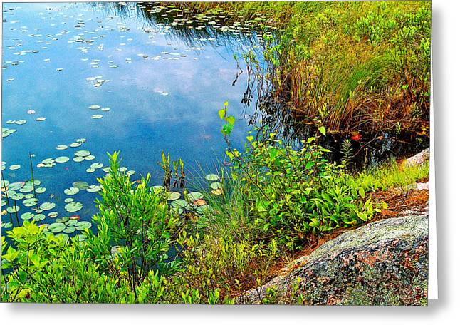 Pond In Park Greeting Cards - Rock by Aunt Betty Pond in Acadia National Park-Maine  Greeting Card by Ruth Hager