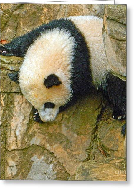 Wildlife Celebration Greeting Cards - Rock Climbing - Baby Bao Bao To The Rescue Greeting Card by Emmy Marie Vickers