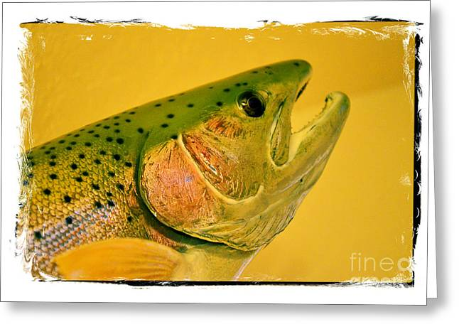 Rainbow Trout Greeting Cards - Rock Creek Rainbow Greeting Card by Lauren Hunter