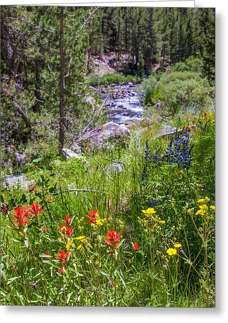 Little Lakes Valley Greeting Cards - Rock Creek Wildflowers Greeting Card by Lynn Bauer