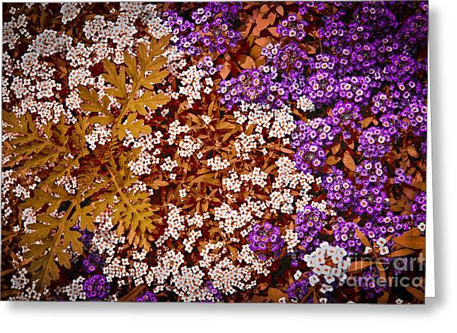 Little Rock Greeting Cards - Rock cress flowers Greeting Card by Elena Elisseeva