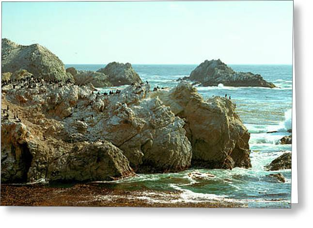 Rock Formations At A Coast, Bird Rock Greeting Card by Panoramic Images