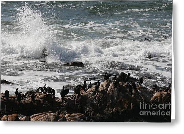 Cambria Greeting Cards - Rock Landing Greeting Card by Sheri Stimson
