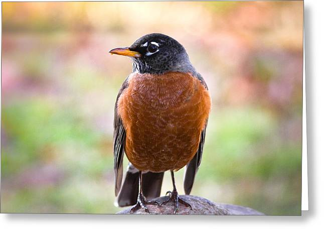 Arkansas Greeting Cards - Rock-N-Robin Greeting Card by Annette Hugen