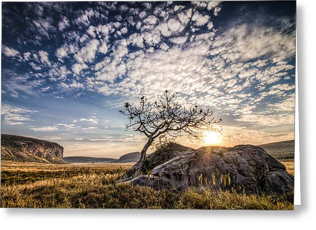 Vale Greeting Cards - Rock Tree and Rising Sun Greeting Card by Mike Gaudaur