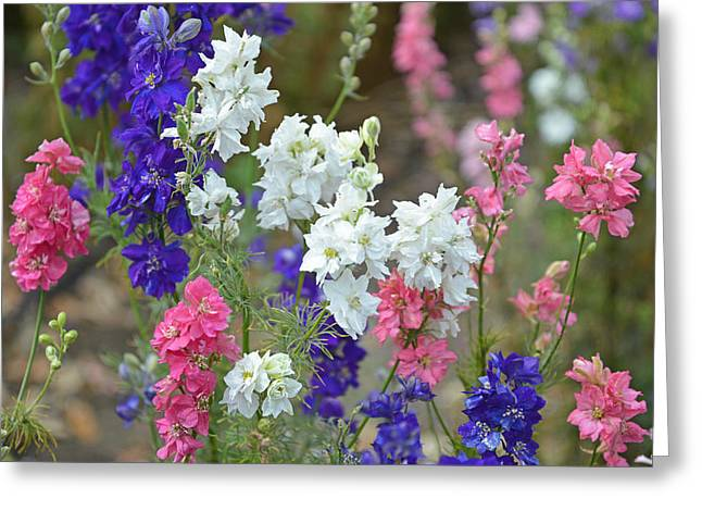 Wildseed Greeting Cards - Rocket Larkspur Greeting Card by Lynn Bauer