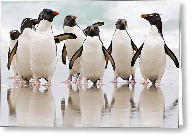 Beach Photos Greeting Cards - Rockhopper Penguin Emerging From The Greeting Card by Heike Odermatt