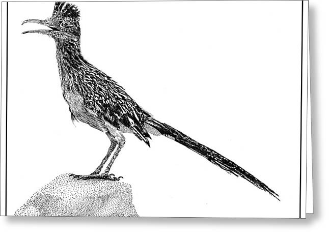 Pen And Ink Drawing Greeting Cards - Rockin Roadrunner Greeting Card by Jack Pumphrey