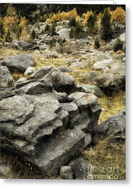 Pontresina Greeting Cards - Rocks and Larch Pines Greeting Card by Timothy Hacker