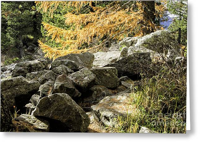 Pontresina Greeting Cards - Rocks and Larch Trees Greeting Card by Timothy Hacker
