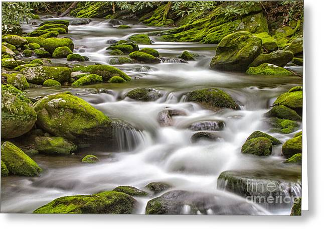 Moss Green Greeting Cards - Rocks and Water Greeting Card by Todd Bielby
