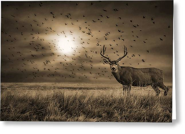 Wildlife Refuge. Greeting Cards - Rocky Mountain Arsenal Buck Deer and Birds Greeting Card by Priscilla Burgers