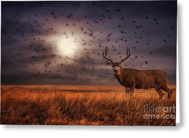 Mule Deer Buck Photograph Greeting Cards - Rocky Mountain Arsenal Deer and Birds Greeting Card by Priscilla Burgers