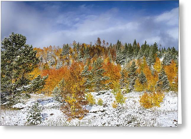 Snow Tree Prints Greeting Cards - Rocky Mountain Autumn Storm Greeting Card by James BO  Insogna