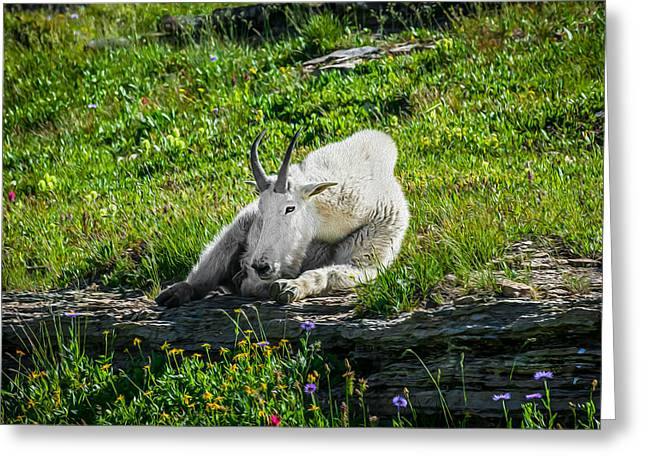 Hooved Mammal Greeting Cards - Rocky Mountain Goat Glacier National Park Painted  Greeting Card by Rich Franco