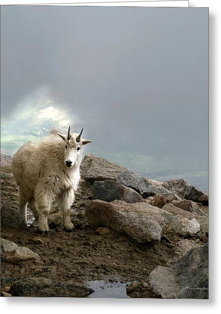 Julie Magers Soulen Greeting Cards - Rocky Mountain Goat Kid in Colorado Greeting Card by Julie Magers Soulen