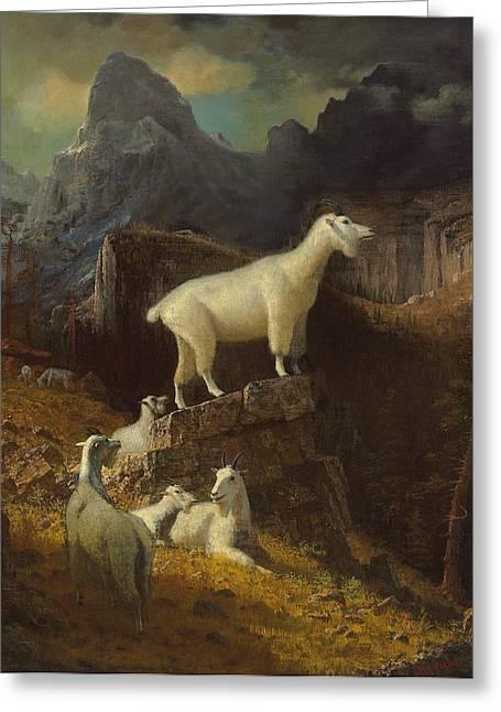 Bierstadt Greeting Cards - Rocky Mountain Goats Greeting Card by Albert Bierstadt