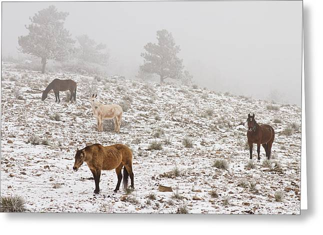Rocky Mountain Foothills Greeting Cards - Rocky Mountain Horses Snow and Fog Greeting Card by James BO  Insogna