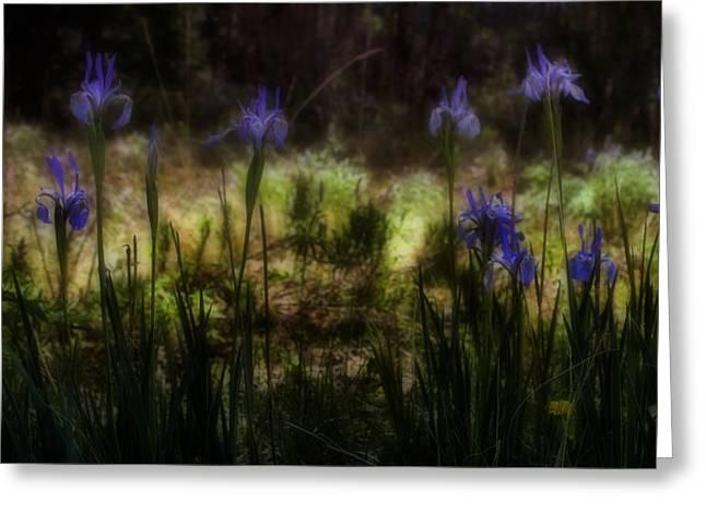 Soft Light Digital Art Greeting Cards - Rocky Mountain Irises Greeting Card by Ellen Heaverlo