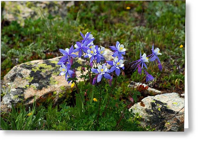Rocky Mountain Queen Greeting Card by Jeremy Rhoades
