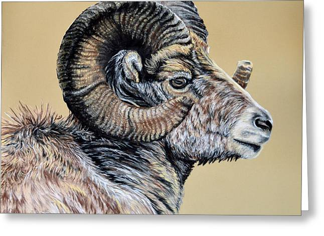 Collection Pastels Greeting Cards - Rocky Mountain Ram Greeting Card by Ann Marie Chaffin