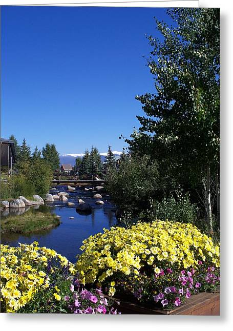 Colorado River Greeting Cards - Rocky Mountain Summer Life Greeting Card by Michael J Bauer