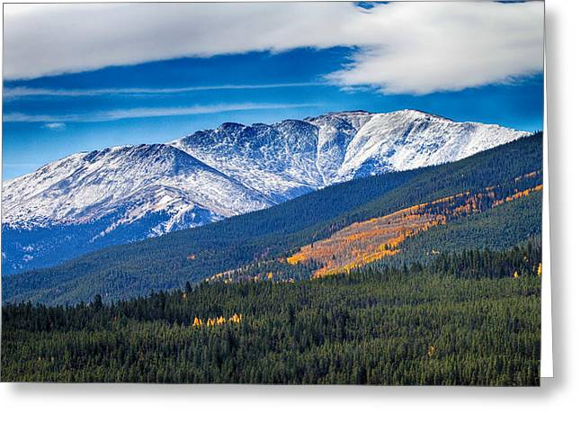 Snow Tree Prints Greeting Cards - Rocky Mountains Independence Pass Greeting Card by James BO  Insogna