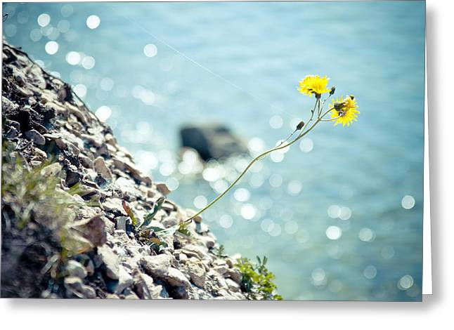 Green Day Greeting Cards - Rocky Ocean Flower  Greeting Card by Raimond Klavins