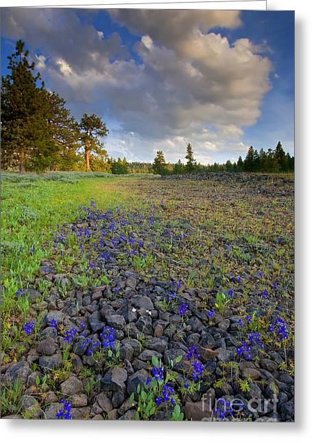 Larkspur Greeting Cards - Rocky Prairie Cloud Explosion Greeting Card by Mike  Dawson