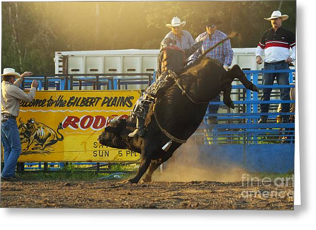 Bull Riding Greeting Cards - Rodeo Bull Riding Greeting Card by Bob Christopher