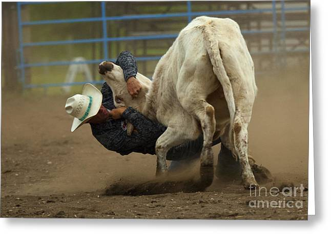 Steer Greeting Cards - Rodeo Gettin Down Greeting Card by Bob Christopher